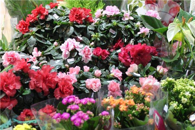 XIX Международная выставка Ландшафт и Приусадебное хозяйство-2012 3371592f6fc4