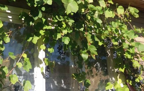 Собирая кусочки лета - Страница 7 D516f13fd24f