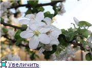 "Фотоконкурс ""Весна идет!"" 42c92e8ee071t"