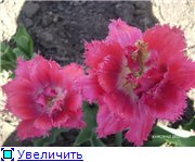 Тюльпаны - Страница 2 Dd4b60e05930t