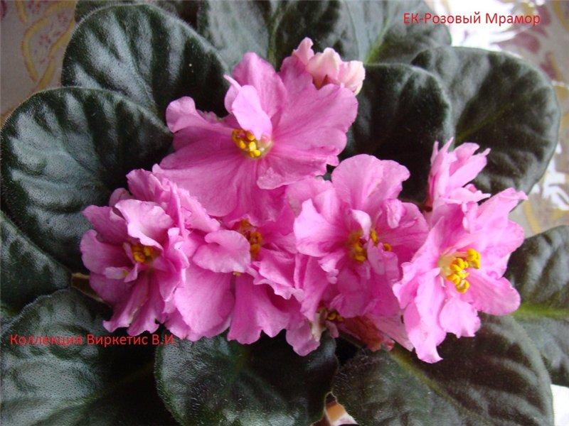 Весеннее  цветение (Хваст от Веры) - Страница 8 Cdcf0bdadbe3