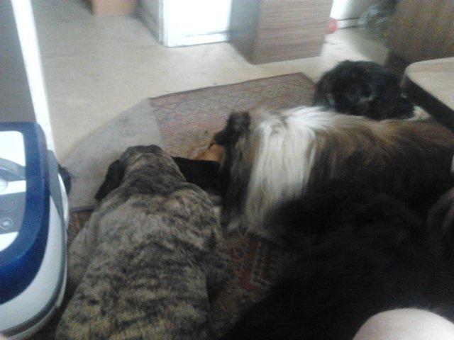 Наши собаки, друзья и гости, кот Мензурка - Страница 30 8e702048789e