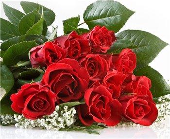Поздравляем с Днем Рождения Светлану (romashca)  7a1d79ac8bc2t