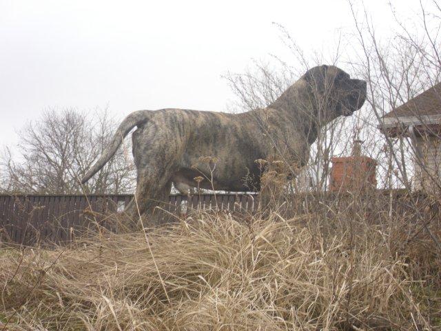 Собаки Татьяны Моисеенковой, кот Мензурка - Страница 3 3f1cb709cb99