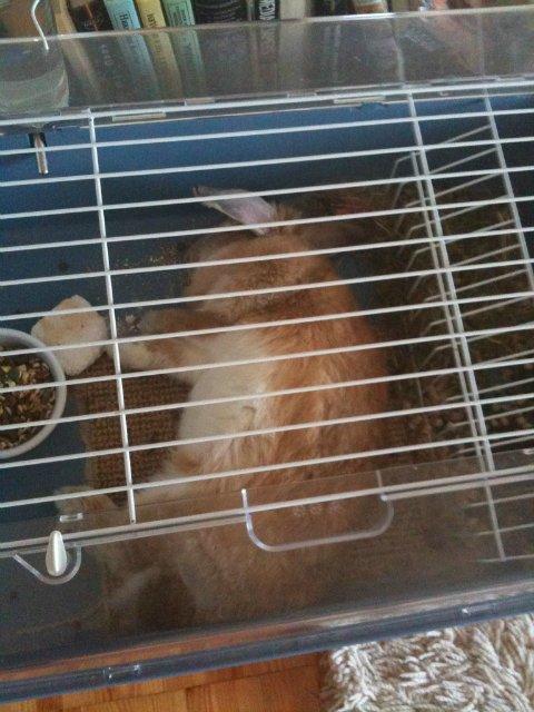 Кролики, декоративные и не очень) - Страница 3 A6dd58dc84bb