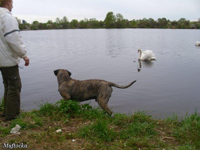 Собаки Татьяны Моисеенковой, кот Мензурка - Страница 4 Dd1e1d3b974c