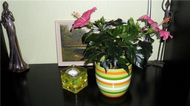 Наши растения - Страница 2 4afe601a4ace