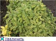 Cад Людмилы Ивановой из черкасс 124f5ce92c43t