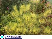 Cад Людмилы Ивановой из черкасс 4173782fe5bet