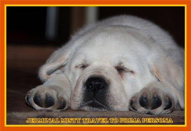 "Питомник ""Прима Персона"". Мои собаки-моя жизнь! 78f0e90354b0"