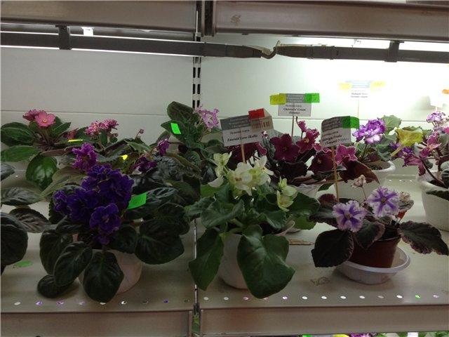 Выставка цветов 7265ad28b24c