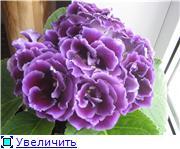 Семена глоксиний и стрептокарпусов почтой - Страница 7 Fb7142c76390t