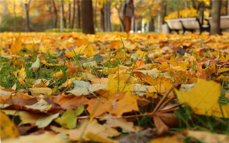 Золотая осень 5d2c00c829a2