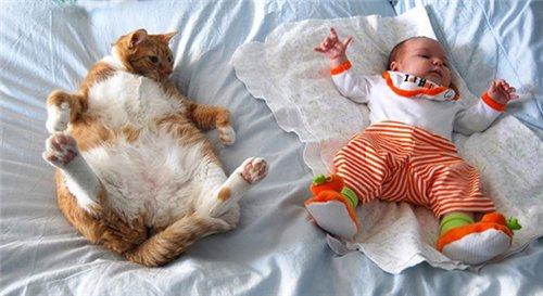 Сама по себе гулёна (о кошках) - Страница 2 Db5807ac5415