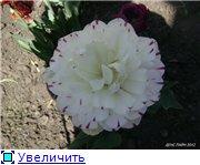 Тюльпаны - Страница 2 19aa9bf06b2ft