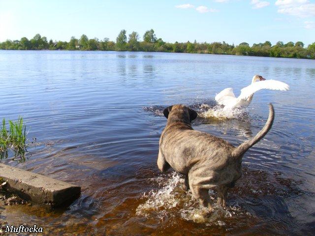 Собаки Татьяны Моисеенковой, кот Мензурка - Страница 4 0452c96f264a