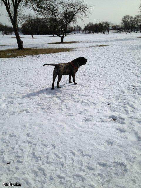 Наши собаки, друзья и гости, кот Мензурка - Страница 32 E9a3d88e24d1