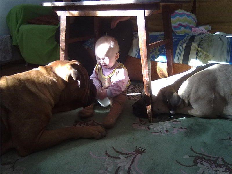 """Фотографии """"Бульмастиф и дети"""" 0cc214d167a9"""