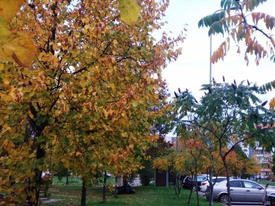 Осень, осень ... как ты хороша...( наше фотонастроение) - Страница 8 C4104beef83b