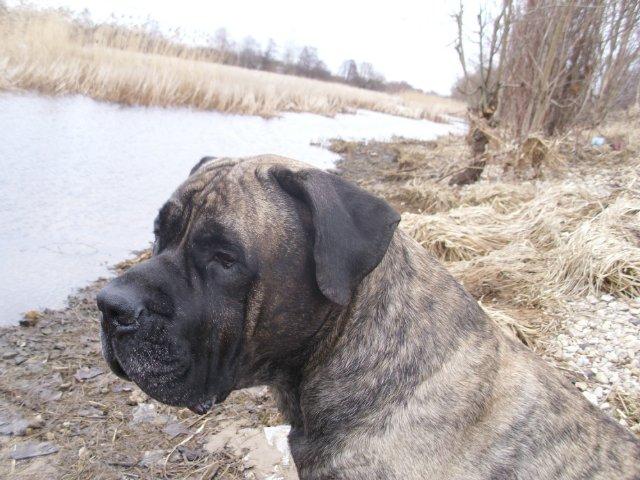 Собаки Татьяны Моисеенковой, кот Мензурка - Страница 3 D3f40bf44923