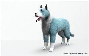 Собаки - Страница 4 7a75d5dd941f