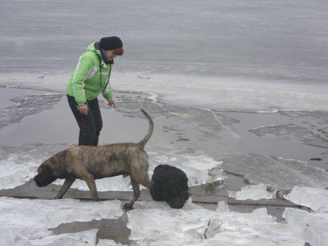 Собаки Татьяны Моисеенковой, кот Мензурка - Страница 3 D768c1b4a814