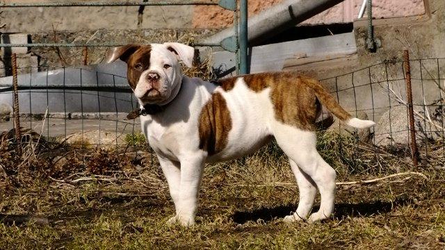 Собаки питомника Carpen Diaz - Страница 2 Dc51c2b13bb9