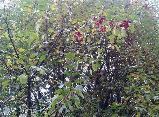 Осень, осень ... как ты хороша...( наше фотонастроение) - Страница 5 093e5cab158c