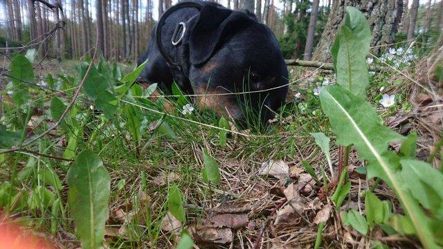 Наши собаки, друзья и гости, кот Мензурка - Страница 30 B5149cb08378