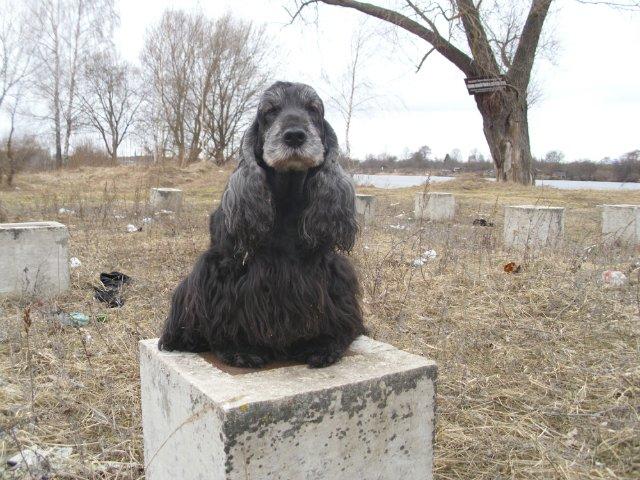 Собаки Татьяны Моисеенковой, кот Мензурка - Страница 3 5b833bd9af5b