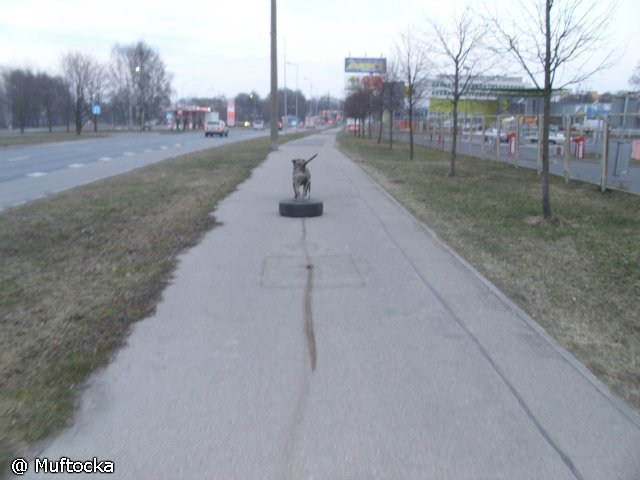 Собаки Татьяны Моисеенковой, кот Мензурка - Страница 3 Ed27630ae702