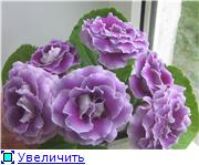 Семена глоксиний и стрептокарпусов почтой - Страница 8 C7d673d692e0t
