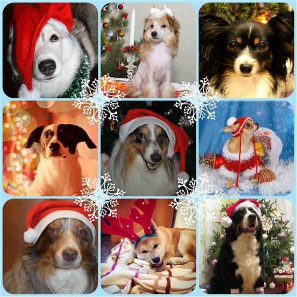 Интернет-магазин Red Dog- только качественные товары для собак! Bff22a37113b