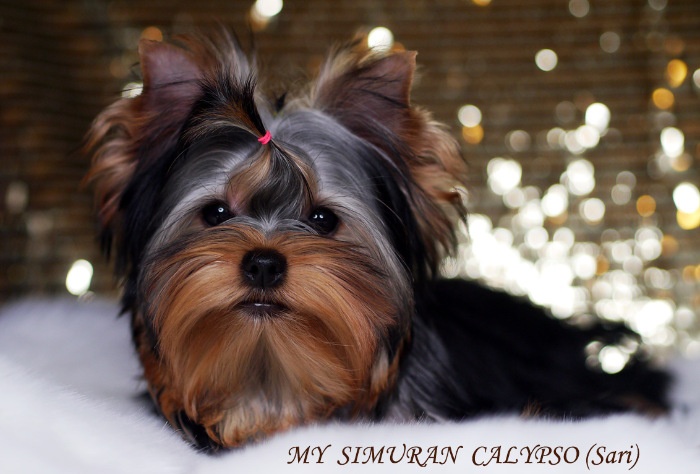 My Simuran Calypso (Сари)  8b83774e415a