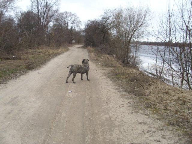Собаки Татьяны Моисеенковой, кот Мензурка - Страница 3 6a583d0c998e