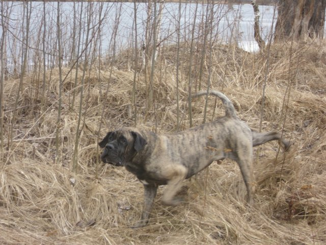 Собаки Татьяны Моисеенковой, кот Мензурка - Страница 3 E8d81a360491