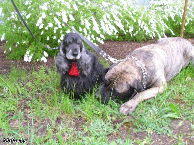 Собаки Татьяны Моисеенковой, кот Мензурка - Страница 4 01eff95278e4