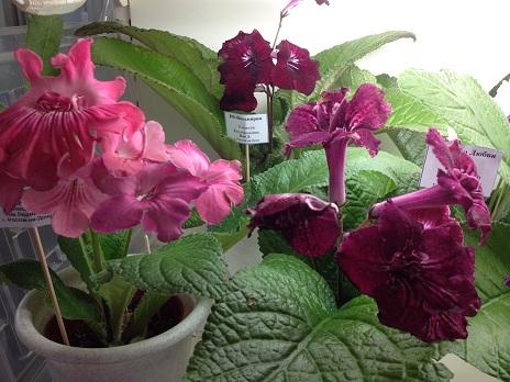 Выставка цветов - Страница 2 1754fe29b450