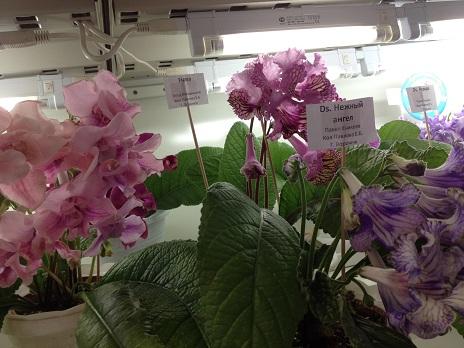 Выставка цветов - Страница 2 258e094721c7