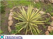 Cад Людмилы Ивановой из черкасс 8dde06b82df9t