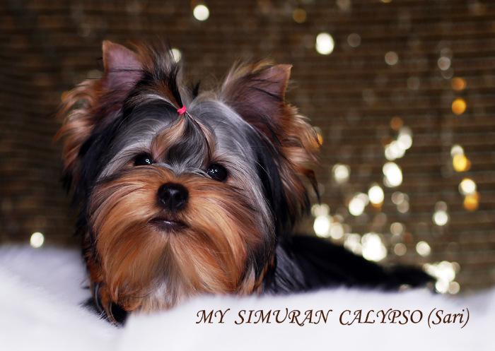 My Simuran Calypso (Сари)  C789a2a26cc6