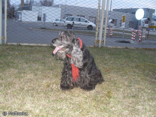 Собаки Татьяны Моисеенковой, кот Мензурка - Страница 3 E55b75b4cedc