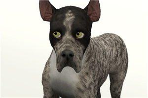 Собаки - Страница 4 1330bca76234