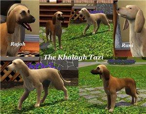 Собаки - Страница 4 Ae141d9030f1