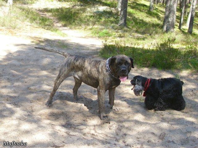 Собаки Татьяны Моисеенковой, кот Мензурка - Страница 4 639f0c6ba513