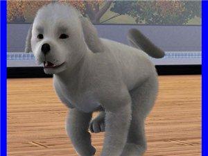 Собаки - Страница 5 832f75e67412