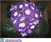 Семена глоксиний и стрептокарпусов почтой - Страница 7 62e1267b59abt
