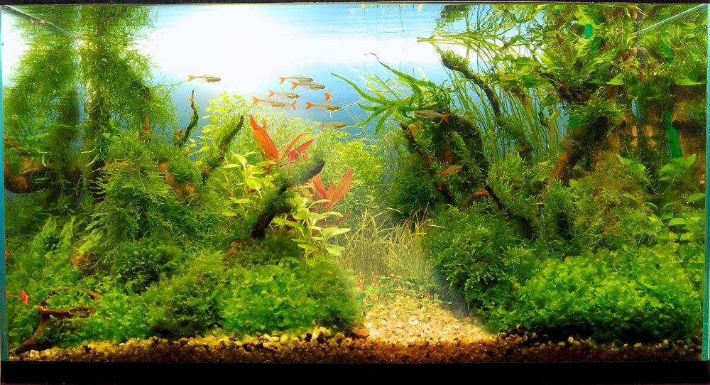 Конкурс аквариумного дизайна Юга России 2013 4c65205b4b53