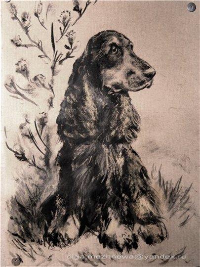 Рисую собак по фото - Страница 6 75a1fdfb9fab