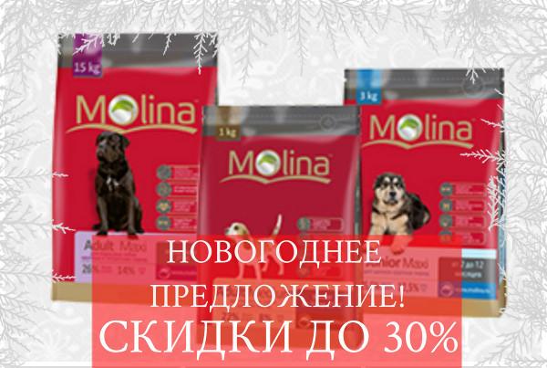 Интернет-магазин Red Dog- только качественные товары для собак! - Страница 3 4d354aa74b84